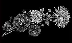 Цветы 006