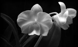 Цветы 004
